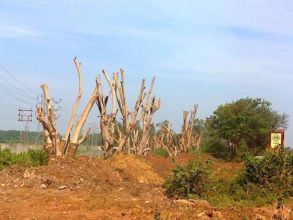 site after plantation